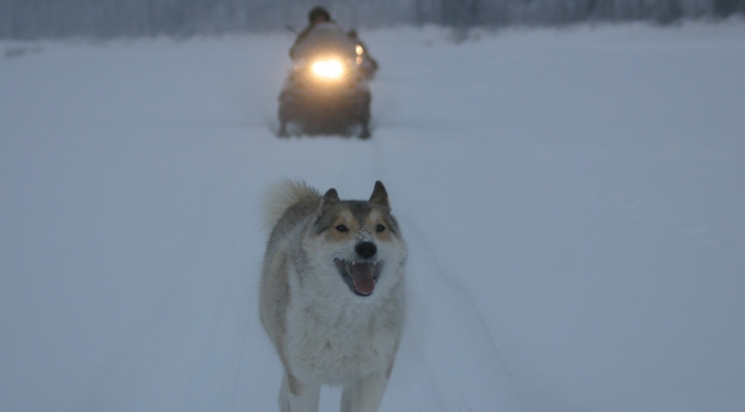 """Happy People a Year in the Taiga"" de Werner Herzog"